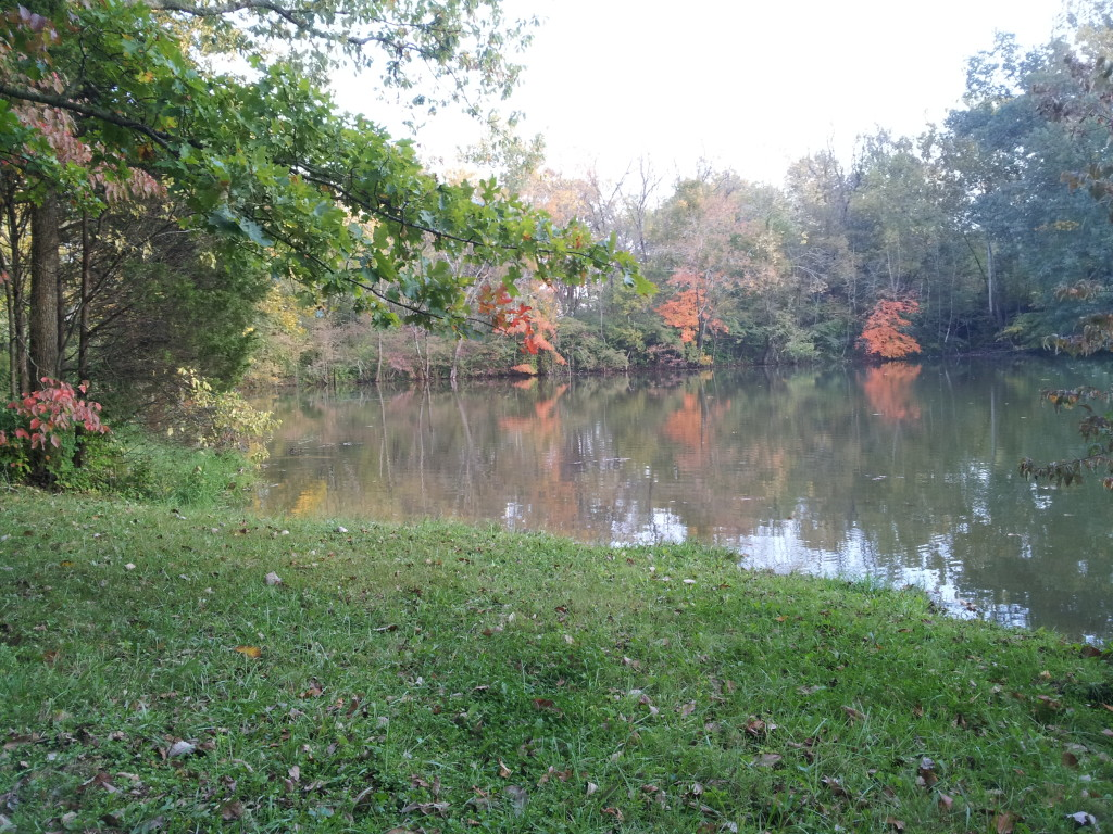 Lake in Fall 12 Bank